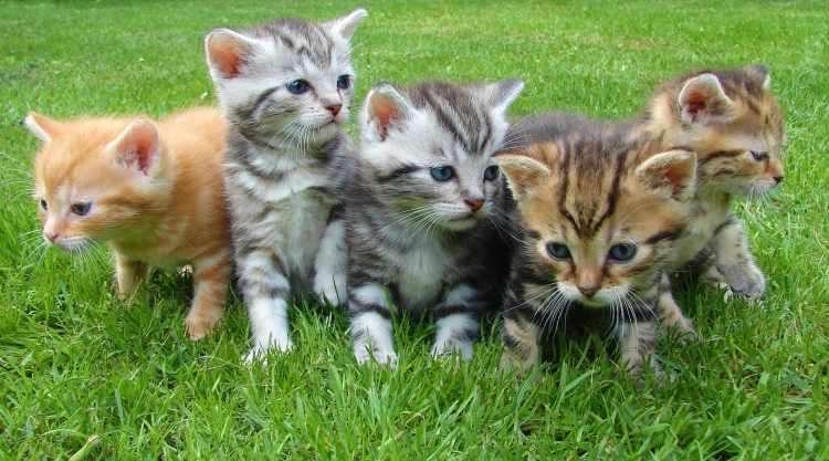 kittens outside exploring