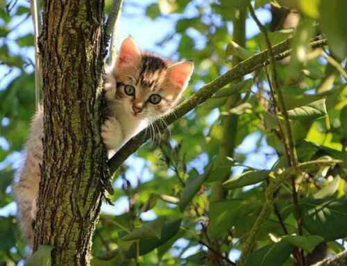 6 Tips to Be an Eco-Friendly Cat Parent
