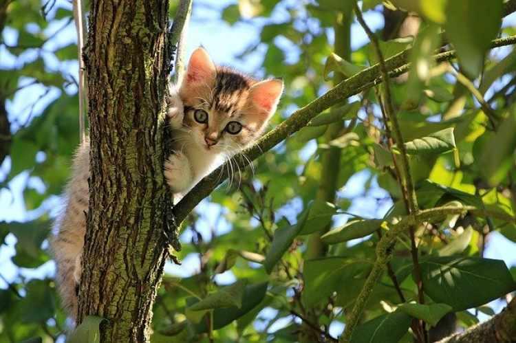 adventure cat outside climbing a tree