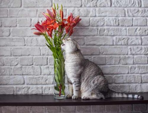 Top 5 Household Hazards for Your Cat