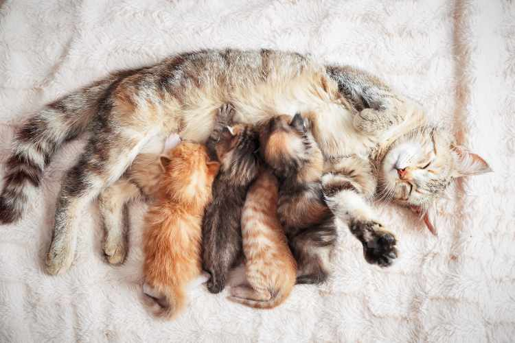 mother cat with litter of kittens