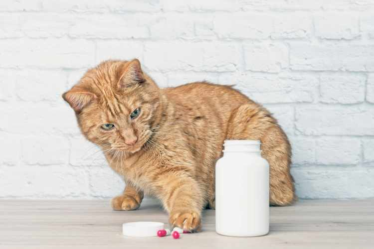 pills and medications hazardous to your cat