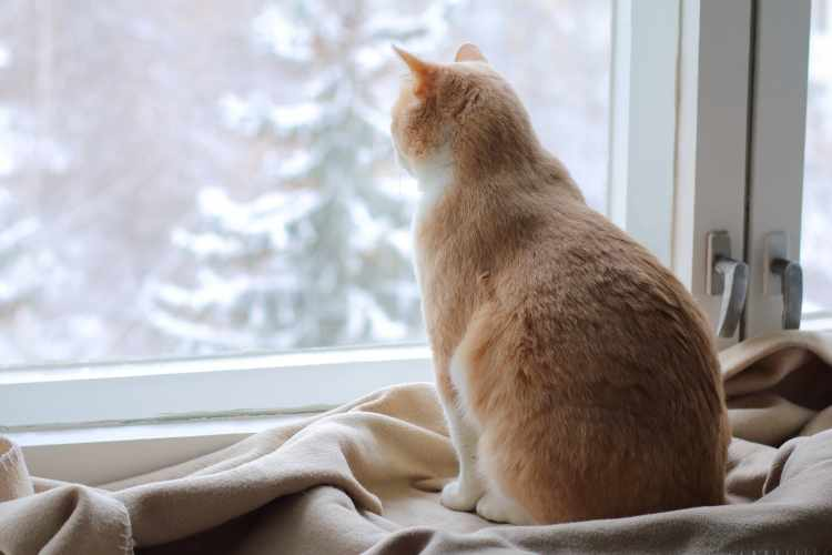 High Rise Syndrome in cats and prevention