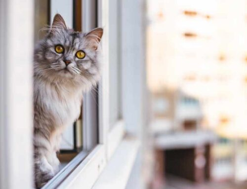 Surprising Facts About High Rise Syndrome in Cats