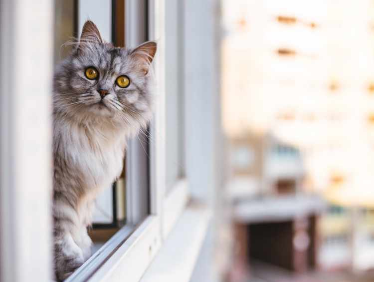 cat looking out high rise window