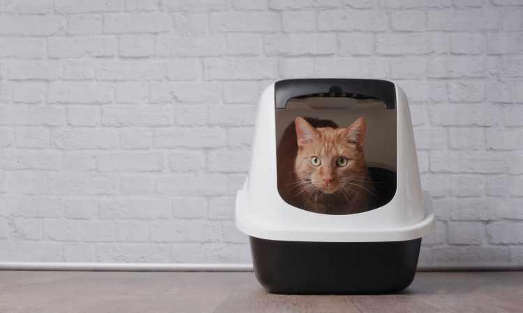 cat in hooded litter box