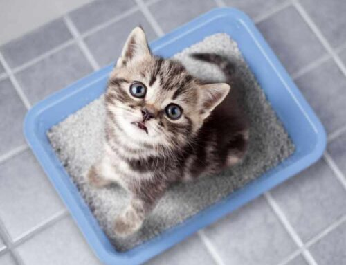 10 Best Litter Boxes That Cat Parents Are Loving Right Now