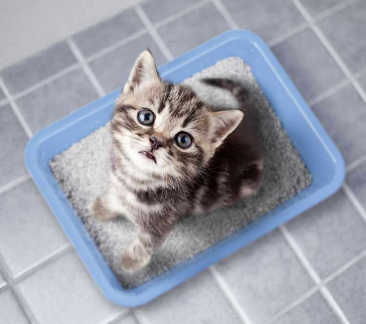 kitten sitting in litter box