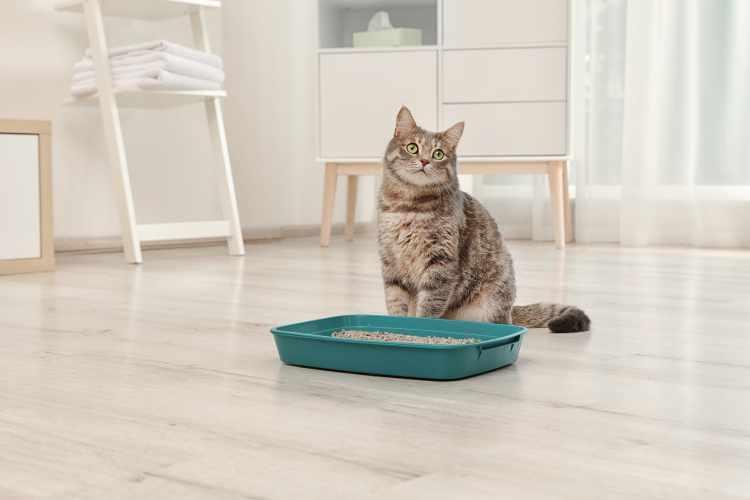 best open tray litter box
